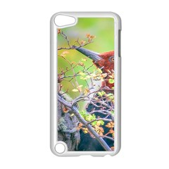 Woodpecker At Forest Pecking Tree, Patagonia, Argentina Apple iPod Touch 5 Case (White)