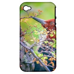Woodpecker At Forest Pecking Tree, Patagonia, Argentina Apple iPhone 4/4S Hardshell Case (PC+Silicone)