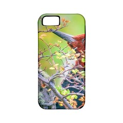 Woodpecker At Forest Pecking Tree, Patagonia, Argentina Apple iPhone 5 Classic Hardshell Case (PC+Silicone)