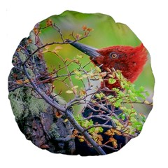 Woodpecker At Forest Pecking Tree, Patagonia, Argentina Large 18  Premium Round Cushions