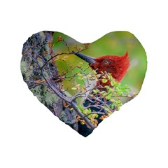 Woodpecker At Forest Pecking Tree, Patagonia, Argentina Standard 16  Premium Heart Shape Cushions