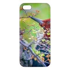 Woodpecker At Forest Pecking Tree, Patagonia, Argentina Apple iPhone 5 Premium Hardshell Case