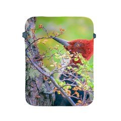 Woodpecker At Forest Pecking Tree, Patagonia, Argentina Apple iPad 2/3/4 Protective Soft Cases