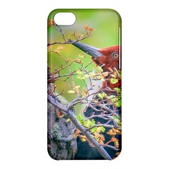 Woodpecker At Forest Pecking Tree, Patagonia, Argentina Apple iPhone 5C Hardshell Case