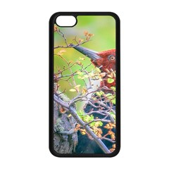 Woodpecker At Forest Pecking Tree, Patagonia, Argentina Apple iPhone 5C Seamless Case (Black)