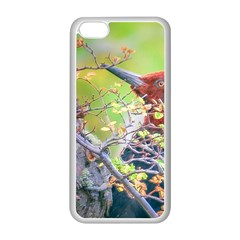 Woodpecker At Forest Pecking Tree, Patagonia, Argentina Apple iPhone 5C Seamless Case (White)