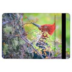 Woodpecker At Forest Pecking Tree, Patagonia, Argentina iPad Air Flip