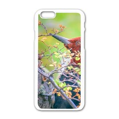 Woodpecker At Forest Pecking Tree, Patagonia, Argentina Apple iPhone 6/6S White Enamel Case