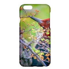 Woodpecker At Forest Pecking Tree, Patagonia, Argentina Apple iPhone 6 Plus/6S Plus Hardshell Case