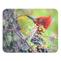 Woodpecker At Forest Pecking Tree, Patagonia, Argentina Double Sided Flano Blanket (Large)