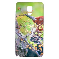 Woodpecker At Forest Pecking Tree, Patagonia, Argentina Galaxy Note 4 Back Case