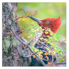 Woodpecker At Forest Pecking Tree, Patagonia, Argentina Large Satin Scarf (Square)