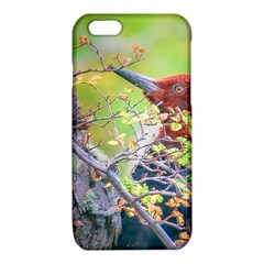 Woodpecker At Forest Pecking Tree, Patagonia, Argentina iPhone 6/6S TPU Case