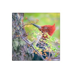 Woodpecker At Forest Pecking Tree, Patagonia, Argentina Satin Bandana Scarf