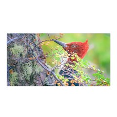 Woodpecker At Forest Pecking Tree, Patagonia, Argentina Satin Wrap