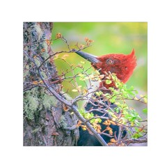 Woodpecker At Forest Pecking Tree, Patagonia, Argentina Small Satin Scarf (Square)