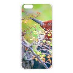 Woodpecker At Forest Pecking Tree, Patagonia, Argentina Apple Seamless iPhone 6 Plus/6S Plus Case (Transparent)