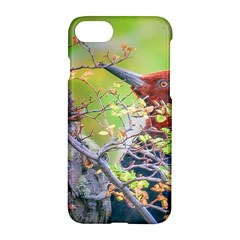 Woodpecker At Forest Pecking Tree, Patagonia, Argentina Apple iPhone 7 Hardshell Case