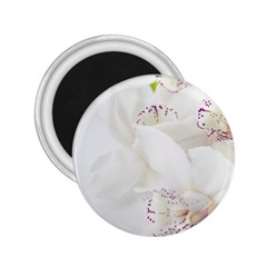 Orchids Flowers White Background 2.25  Magnets