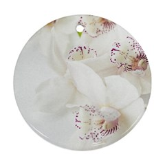 Orchids Flowers White Background Ornament (round)