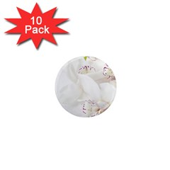 Orchids Flowers White Background 1  Mini Magnet (10 Pack)