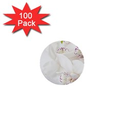 Orchids Flowers White Background 1  Mini Buttons (100 Pack)