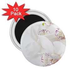 Orchids Flowers White Background 2 25  Magnets (10 Pack)