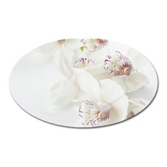 Orchids Flowers White Background Oval Magnet