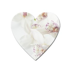 Orchids Flowers White Background Heart Magnet