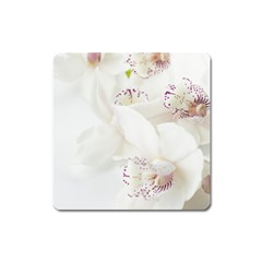 Orchids Flowers White Background Square Magnet