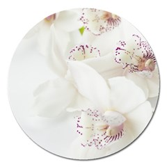Orchids Flowers White Background Magnet 5  (round)