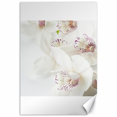 Orchids Flowers White Background Canvas 12  x 18