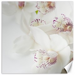 Orchids Flowers White Background Canvas 16  x 16