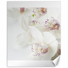 Orchids Flowers White Background Canvas 16  X 20