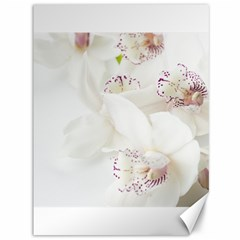 Orchids Flowers White Background Canvas 36  X 48