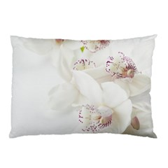 Orchids Flowers White Background Pillow Case