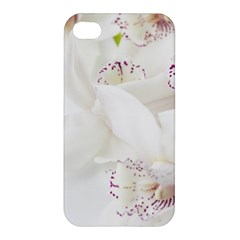 Orchids Flowers White Background Apple Iphone 4/4s Premium Hardshell Case