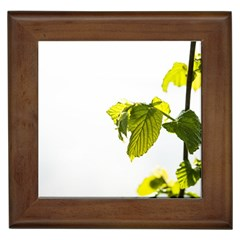 Leaves Nature Framed Tiles
