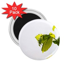 Leaves Nature 2.25  Magnets (10 pack)