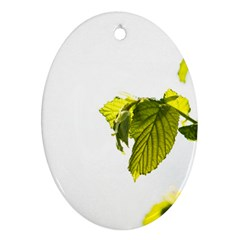 Leaves Nature Oval Ornament (two Sides)