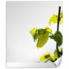 Leaves Nature Canvas 20  x 24