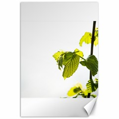 Leaves Nature Canvas 20  x 30