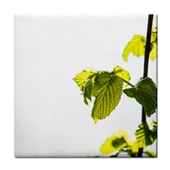 Leaves Nature Face Towel