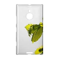 Leaves Nature Nokia Lumia 1520