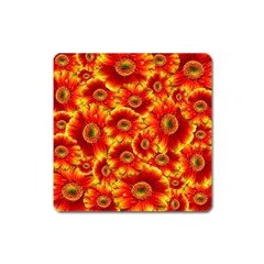 Gerbera Flowers Nature Plant Square Magnet