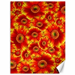 Gerbera Flowers Nature Plant Canvas 36  X 48