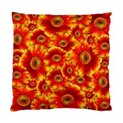 Gerbera Flowers Nature Plant Standard Cushion Case (one Side)