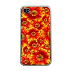 Gerbera Flowers Nature Plant Apple Iphone 4 Case (clear)