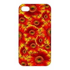 Gerbera Flowers Nature Plant Apple iPhone 4/4S Premium Hardshell Case