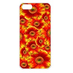 Gerbera Flowers Nature Plant Apple Iphone 5 Seamless Case (white)